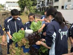 永仁高中嚐鮮課程-生活中的科學蚓菜共生