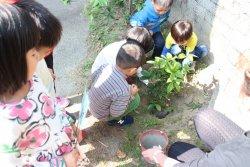 大內師生一同植樹、賞樹、愛樹、惜樹