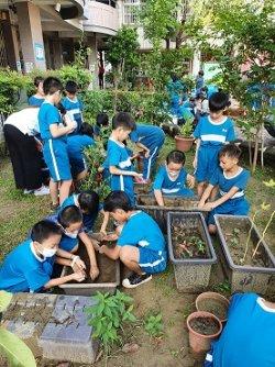 深坑幸福農園-學生樂當小農夫