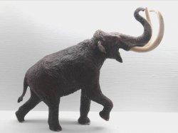 受哈佛研究「復活」牽動 台南左鎮猛獁象化石人氣遽升