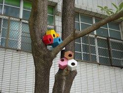 生態鳥屋駐校園,歡迎鳥朋友入住