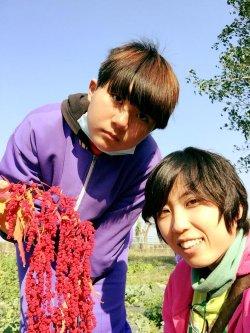 柳營國中農藝大豐收,紅藜紅似火,翠玉白菜甜滋滋