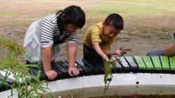 吉貝耍國小—低年級種菱角全紀錄2